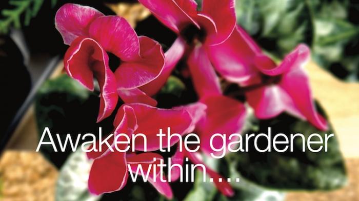 cyclamen gardener within sm