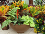 Container Gardens can be purchased at Martin Nursery