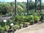 Purchase Shrubs & Trees from Martin Nursery