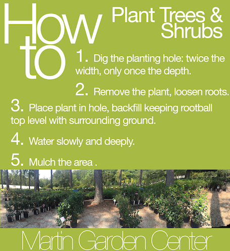 how-to-plant-trees-and-shrubs-small